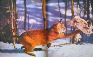 фото страниц Охота #2