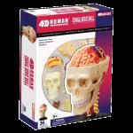 Анатомический макет 'Череп и мозг'
