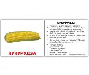 фото Розвиваючі міні-картки 'Вундеркінд з пелюшок' Овочі з фактами #4