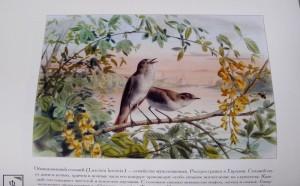 фото страниц Самые красивые птицы #2