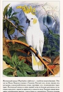 фото страниц Самые красивые птицы #6