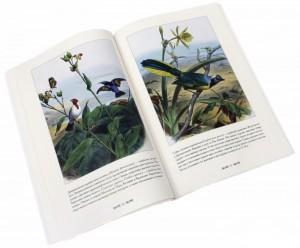 фото страниц Самые красивые птицы #3