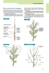 фото страниц Успешная обрезка, формировка, прививка и омоложение фруктовых деревьев и винограда #7