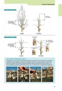 фото страниц Успешная обрезка, формировка, прививка и омоложение фруктовых деревьев и винограда #3