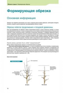 фото страниц Успешная обрезка, формировка, прививка и омоложение фруктовых деревьев и винограда #8