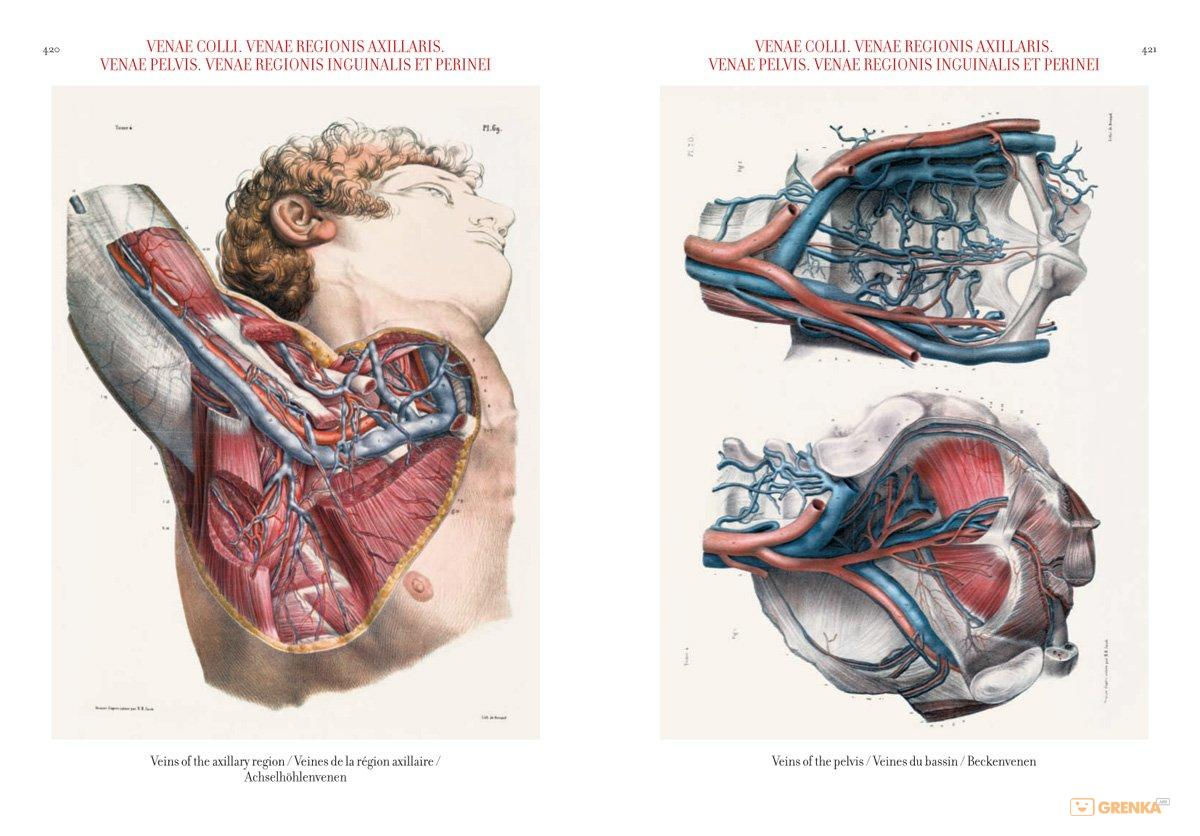 Atlas Of Human Anatomy And Surgery Jean Marie Minor