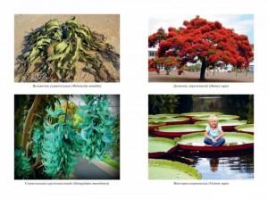 фото страниц Самые необычные растения #2