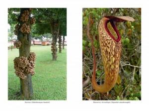 фото страниц Самые необычные растения #4