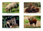 фото страниц Самые необычные животные #4