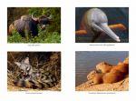 фото страниц Самые необычные животные #3
