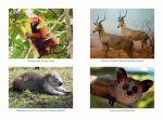 фото страниц Самые необычные животные #2