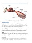 фото страниц Анатомия стретчинга. Большая иллюстрированная энциклопедия #7