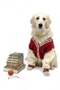 вязаная одежда для собак элисон дженкинс купить книгу в киеве и