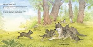 фото страниц Животные в природе. Волк #3