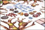 фото Настольная игра Crowd Games 'О хвостах и перьях' (16003) #2