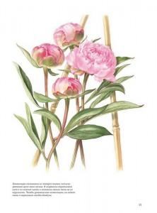 фото страниц Портреты цветов от А до Я. Практическое руководство по рисованию акварелью #5