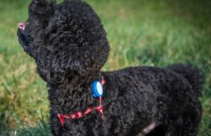 фото Поводок Dog strip 52-59x2.5 Green (Р26797) #6