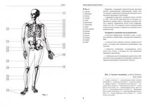 фото страниц Анатомия человека. Компактный атлас-раскраска #4
