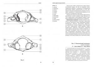фото страниц Анатомия человека. Компактный атлас-раскраска #5