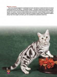 фото страниц Кошки. Большая энциклопедия #4