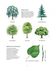 фото страниц Мой гербарий. Листья деревьев #5