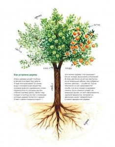 фото страниц Мой гербарий. Листья деревьев #8