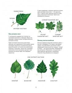 фото страниц Мой гербарий. Листья деревьев #10
