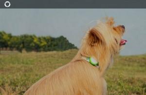 фото Силиконовый чехол для Amazpet Smart Dog Tag Yellow (Р28817) #5