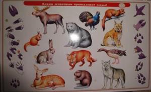 фото Набор карточек к электровикторине 'Детям о животных' (2154) #6