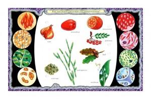 фото Набор карточек к электровикторине 'Детям о растениях' (2963) #5