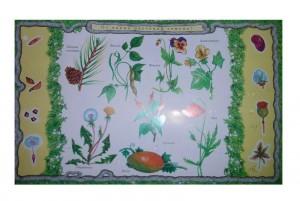 фото Набор карточек к электровикторине 'Детям о растениях' (2963) #2