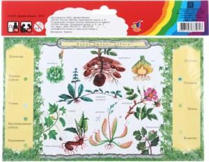 фото Набор карточек к электровикторине 'Детям о растениях' (2963) #7