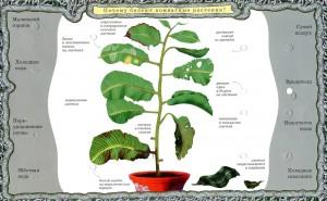 фото Набор карточек к электровикторине 'Детям о растениях' (2963) #4
