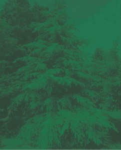 фото страниц Открываем тайны леса #3