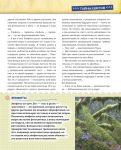 фото страниц Открываем тайны леса #11