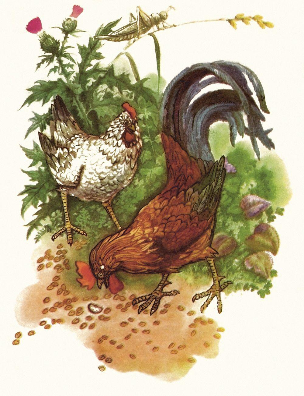 Обои сказка, Гриб, Коллаж, ферма. Разное foto 18