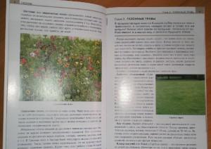 фото страниц Газоны. Элементы садового дизайна #2