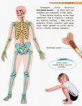 фото страниц Людина та її тіло #9