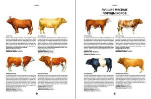 фото страниц Мясо. Полное иллюстрированное руководство #5