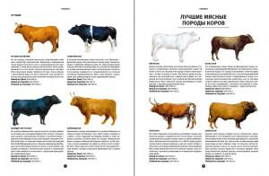 фото страниц Мясо. Полное иллюстрированное руководство #4
