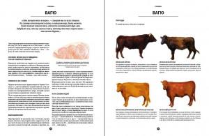 фото страниц Мясо. Полное иллюстрированное руководство #6