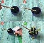 фото Набір 12 кольорових олівців Brinjal 'Ecostick': чарівні олівці з насінням рослин #9