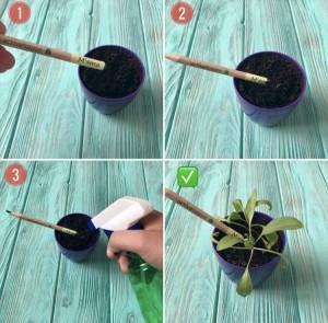 фото Набір 6 кольорових олівців Brinjal 'Ecostick': чарівні олівці з насінням рослин #11