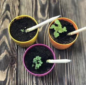 фото Набір 6 кольорових олівців Brinjal 'Ecostick': чарівні олівці з насінням рослин #12