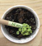 фото Набір 6 кольорових олівців Brinjal 'Ecostick': чарівні олівці з насінням рослин #10