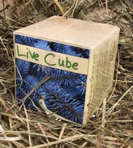 фото Набір для вирощування Brinjal 'Live Cube' блакитна ялина #7