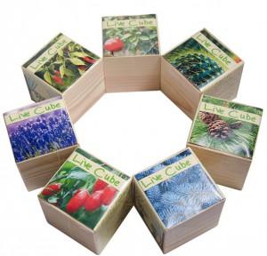 фото Набір для вирощування Brinjal 'Live Cube' блакитна ялина #3