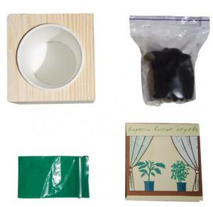 фото Набір для вирощування Brinjal 'Live Cube' блакитна ялина #4