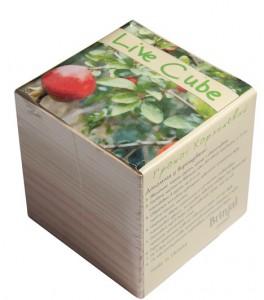 Подарок Набір для вирощування Brinjal 'Live Cube' гранат карликовий