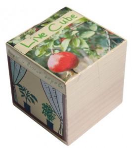 фото Набір для вирощування Brinjal 'Live Cube' гранат карликовий #2